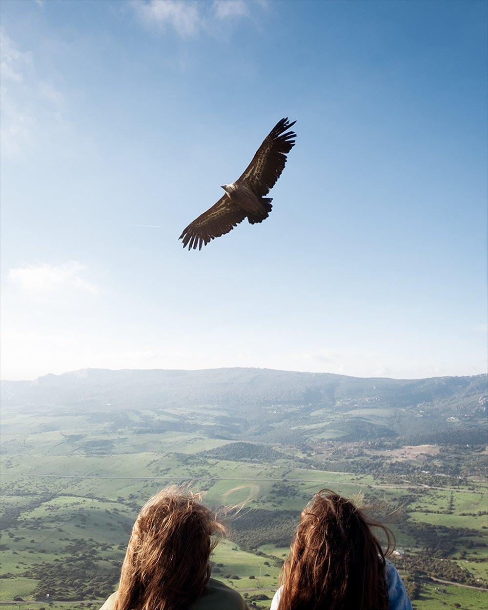 Fabian Tegeler eagel flying sky countryside calming image girls